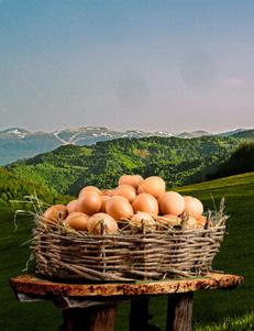 Jaja domaća  / 10 kom
