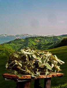 Livadski čaj LIPA / 50gr