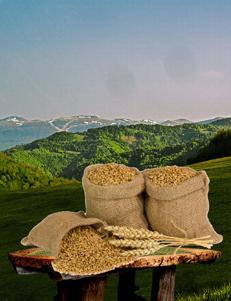Pšenica u zrnu / 1kg